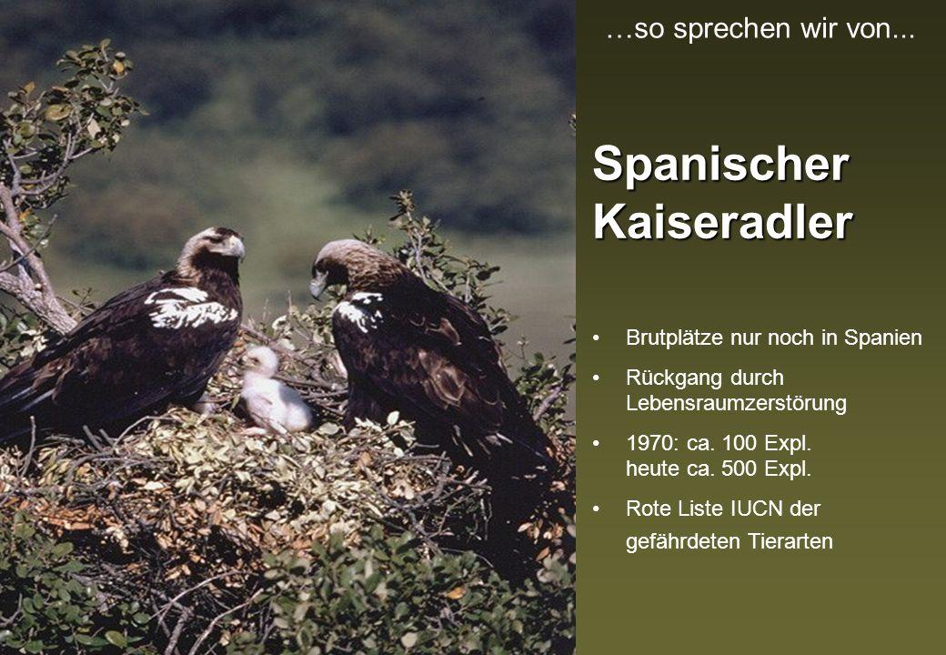 Grauer Kranich 50000 Exemplare überwintern auf dem Vogelzug aus dem Norden in den Kronen der Korkeichen Bedrohung des Lebensraums durch Veränderung der Kulturlandschaft …so sprechen wir von...