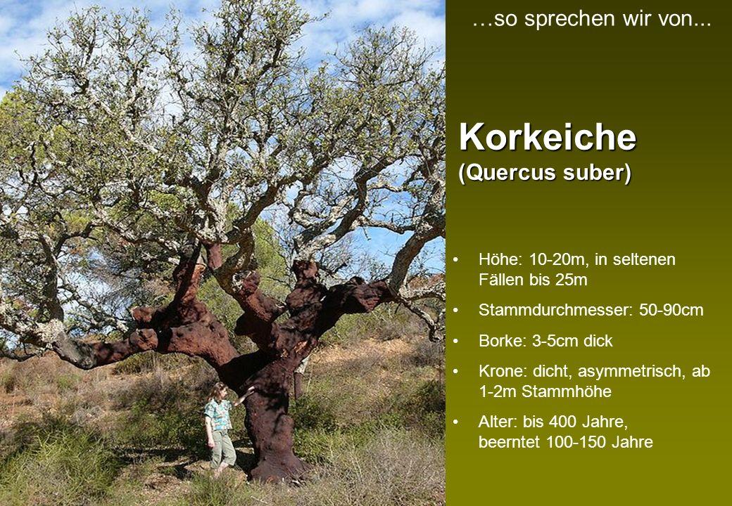 Arten- vielfalt Korkeichenwälder sind die artenreichsten Wälder Europas 140 Pflanzen- und 55 Tierarten Bis 60 Pflanzenarten pro Quadratmeter 42 Vogelarten …so sprechen wir von...