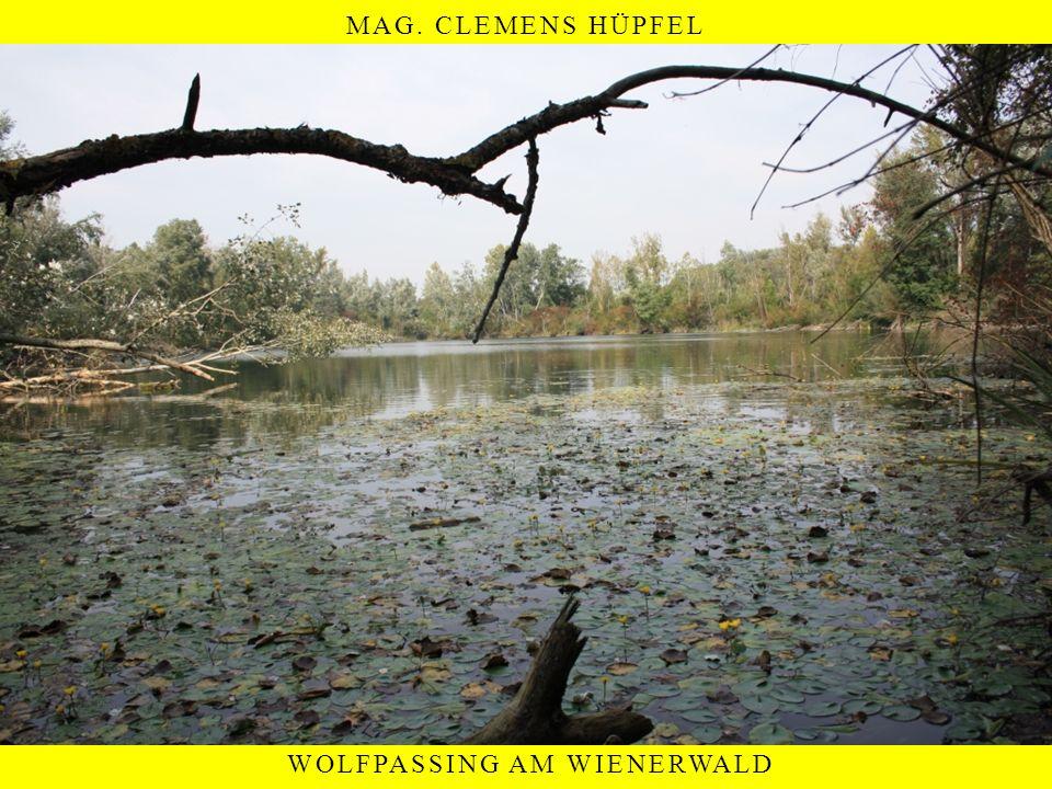 MAG. CLEMENS HÜPFEL WOLFPASSING AM WIENERWALD