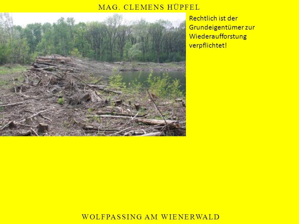 MAG. CLEMENS HÜPFEL WOLFPASSING AM WIENERWALD Rechtlich ist der Grundeigentümer zur Wiederaufforstung verpflichtet!