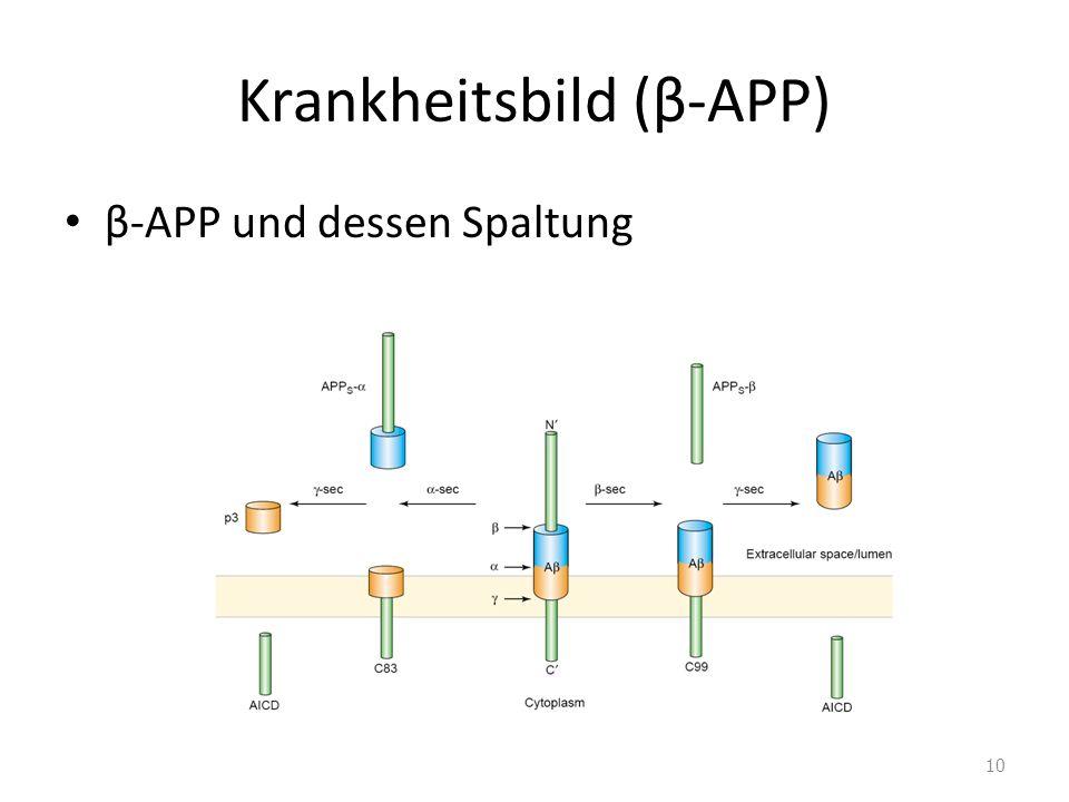 Krankheitsbild (β-APP) β-APP und dessen Spaltung 10