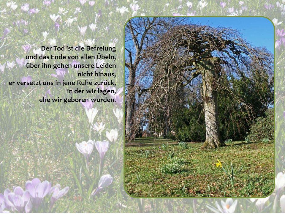 Fest und stark ist nur der Baum, der unablässig Winden ausgesetzt war, denn im Kampf festigen und verstärken sich seine Wurzeln.