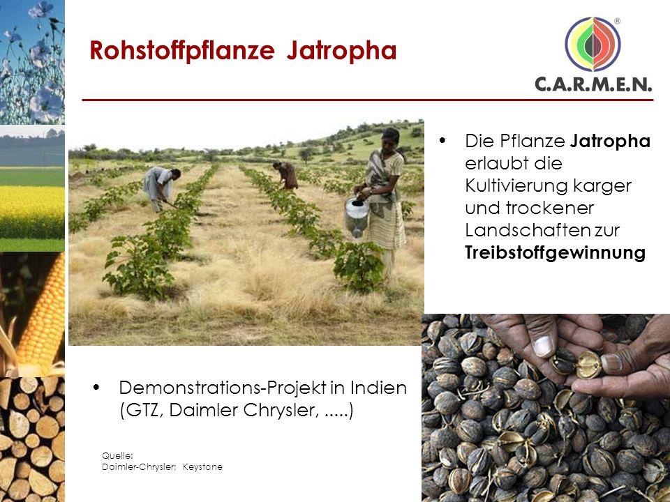 Rohstoffpflanze Jatropha Die Pflanze Jatropha erlaubt die Kultivierung karger und trockener Landschaften zur Treibstoffgewinnung Demonstrations-Projek