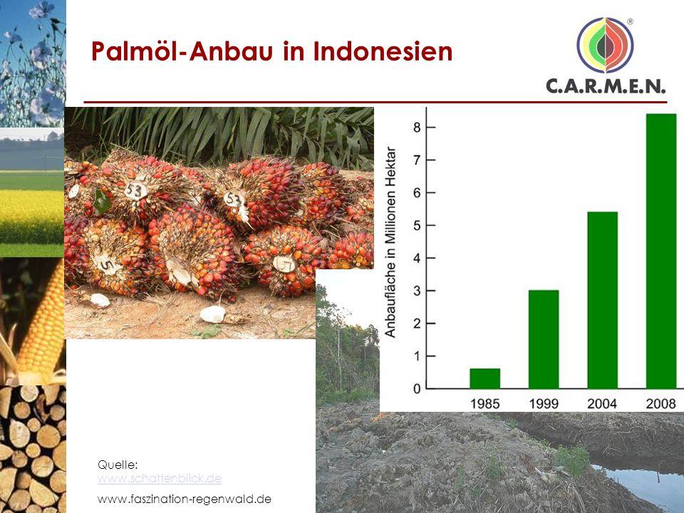 Palmöl-Anbau in Indonesien Quelle: www.schattenblick.de www.schattenblick.de www.faszination-regenwald.de