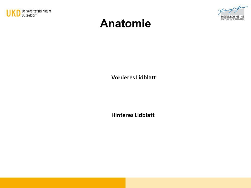 Funktionell-anatomische Aspekte Vorderes Lidblatt Haut (N.