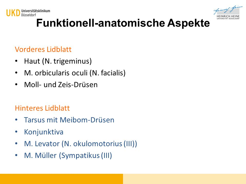 Funktionell-anatomische Aspekte Vorderes Lidblatt Haut (N. trigeminus) M. orbicularis oculi (N. facialis) Moll- und Zeis-Drüsen Hinteres Lidblatt Tars