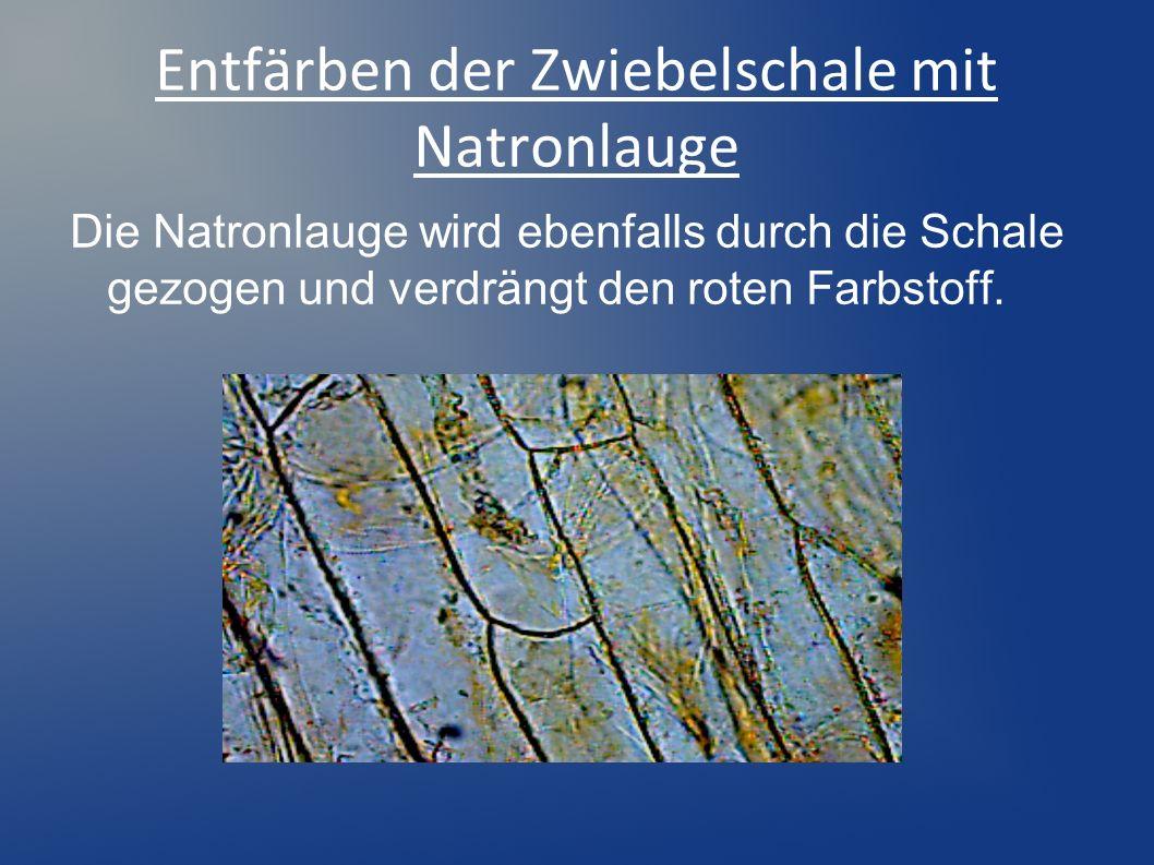 Entfärben der Zwiebelschale mit Natronlauge Die Natronlauge wird ebenfalls durch die Schale gezogen und verdrängt den roten Farbstoff.