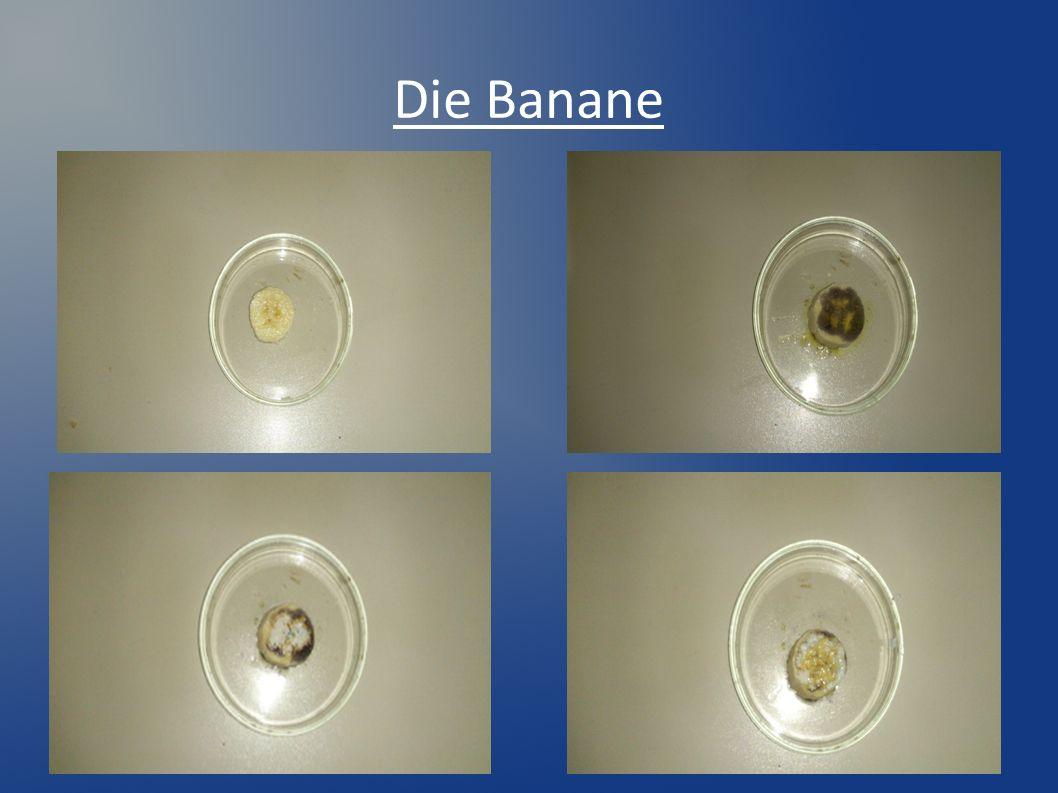 3. Beide Lösungen werden mit Öl überschichtet... … und ausgeschüttelt.