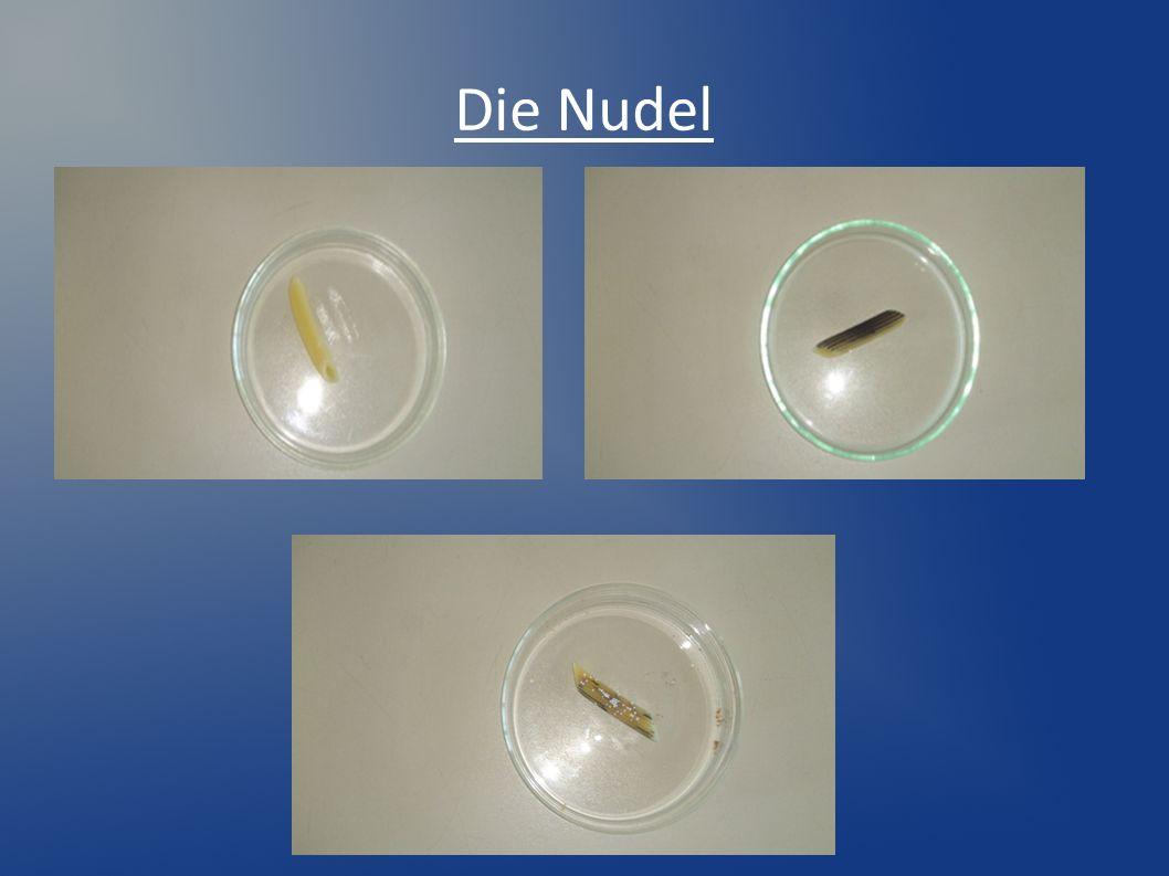 Einfärben einer Zwiebelschale mit Neutralrot Ein Tropfen Neutralrotlösung wird neben das Präparat gegeben und mit Filterpapier durch die Zwiebelschale gezogen.