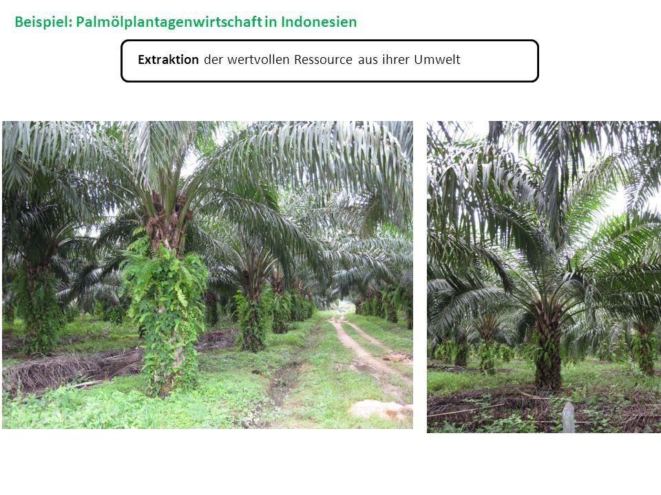 Extraktion der wertvollen Ressource aus ihrer Umwelt Beispiel: Palmölplantagenwirtschaft in Indonesien