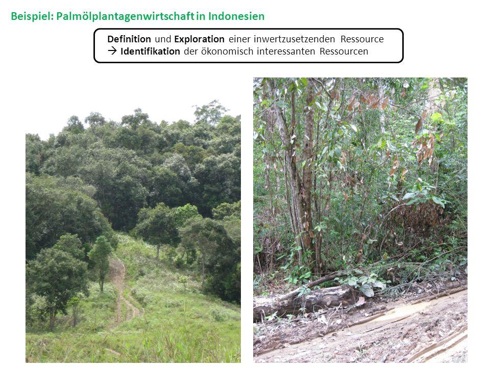 Definition und Exploration einer inwertzusetzenden Ressource Identifikation der ökonomisch interessanten Ressourcen Beispiel: Palmölplantagenwirtschaf