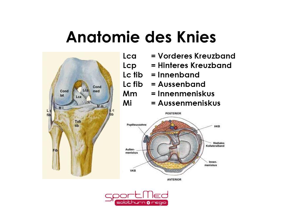 – Aktivitätsanpassung – Muskeltraining – (Schienen) Cave!!!