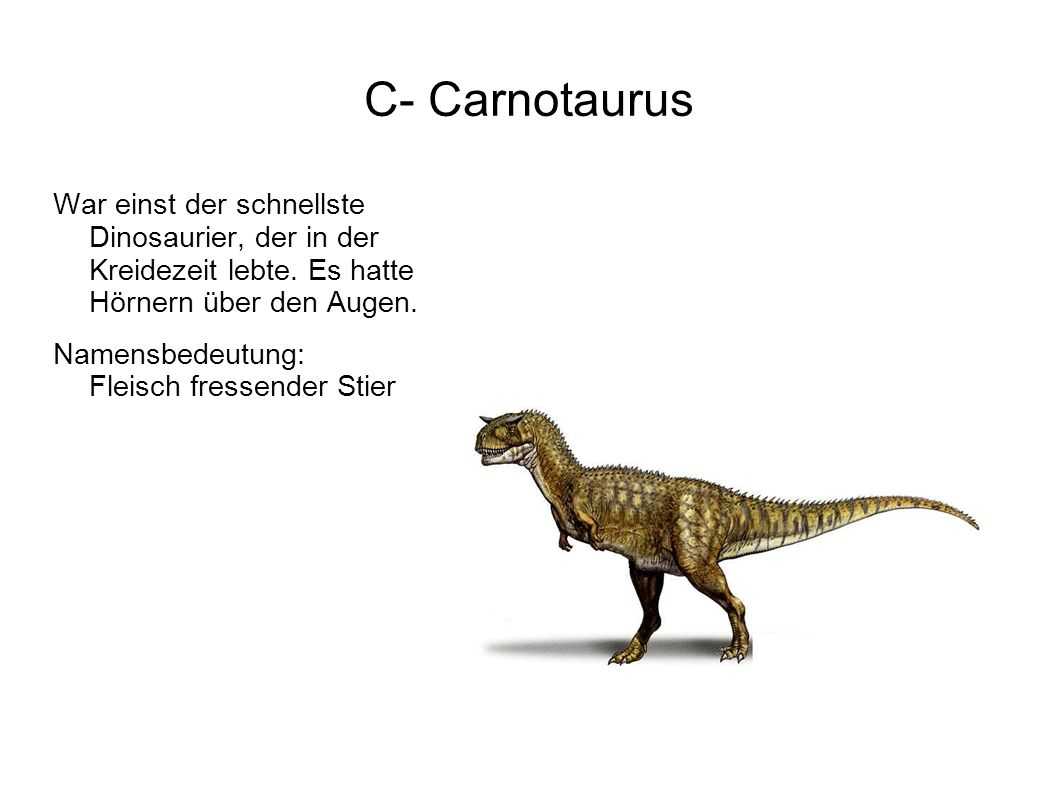 D- Diplodocus Ein Dino, der dem Brachiosaurus doll ähnelte. Namensbedeutung: Doppelbalken