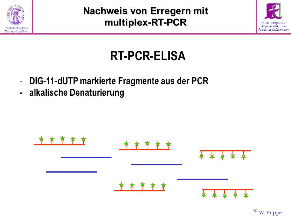 RT-PCR-ELISA - DIG-11-dUTP markierte Fragmente aus der PCR - alkalische Denaturierung Nachweis von Erregern mit multiplex-RT-PCR © W. Puppe UK-SH / Ca