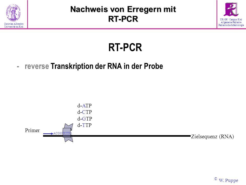 RT-PCR - reverse Transkription der RNA in der Probe Primer d-ATP d-CTP d-GTP d-TTP ACGGTCTTG Zielsequenz (RNA) Nachweis von Erregern mit RT-PCR © W. P