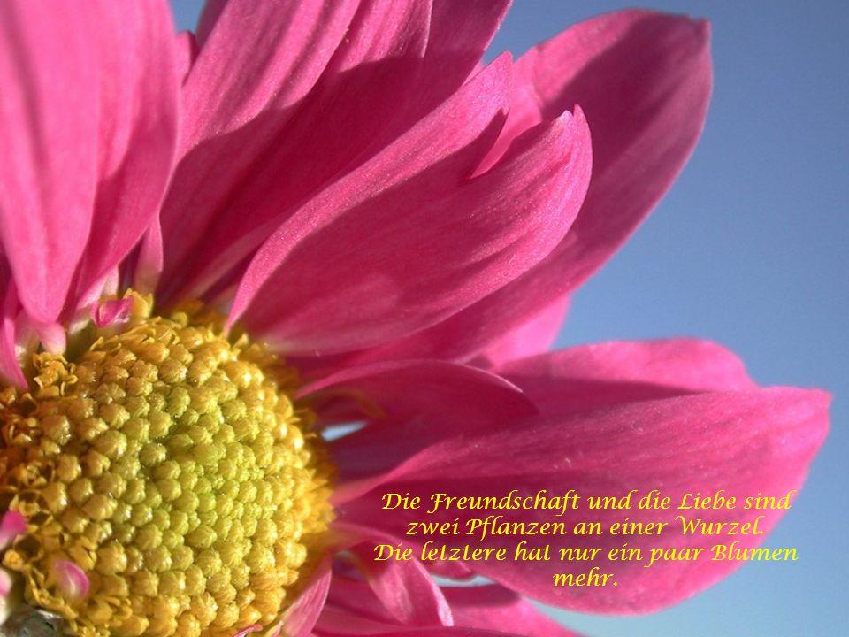 Blumen sind die schönen Worte und Hieroglyphen der Natur, mit denen sie uns andeutet, wie lieb sie uns hat.
