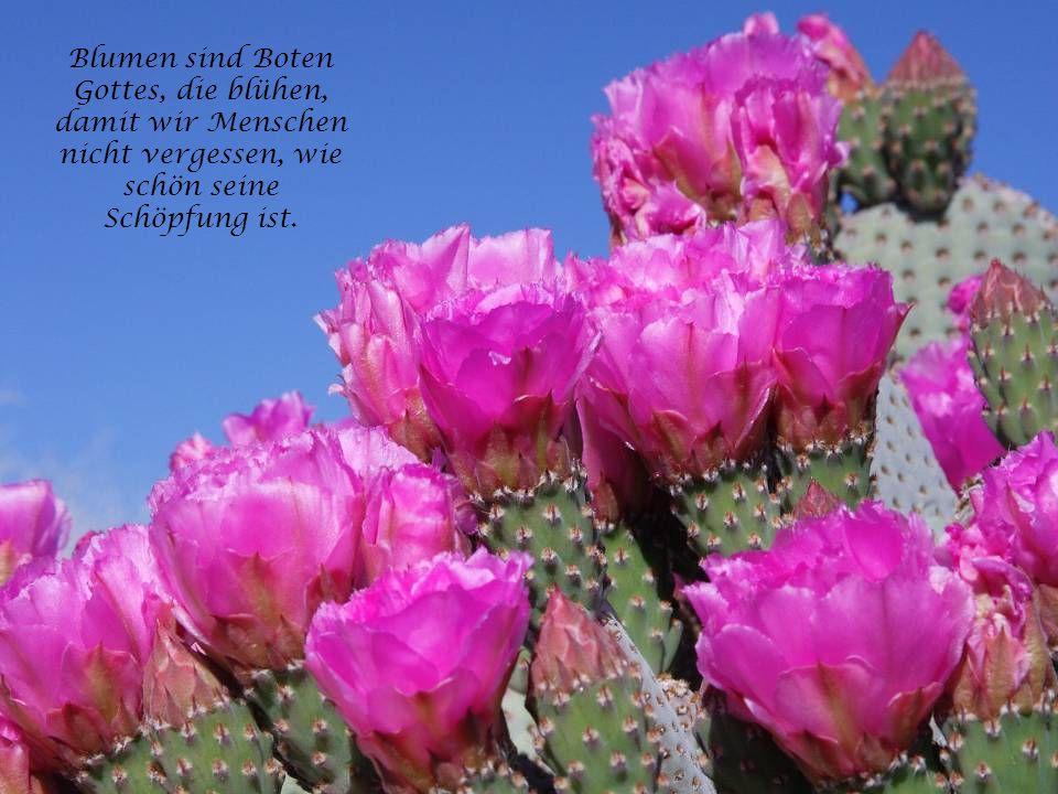 Unter Blumen soll dein Leben fließen wie ein sanfter Bach, und das größte Glück auf Erden wünsche ich dir jeden Tag.