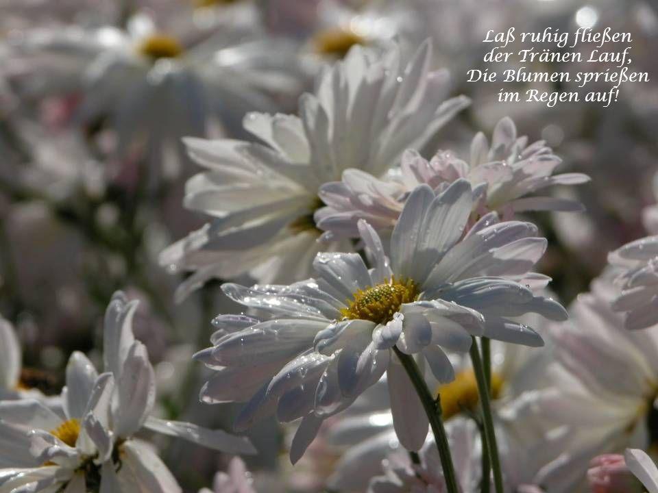 Bewahre die Liebe in deinem Herzen. Ohne sie ist das Leben wie ein Garten ohne Sonne, aus dem die Blumen verschwunden sind.