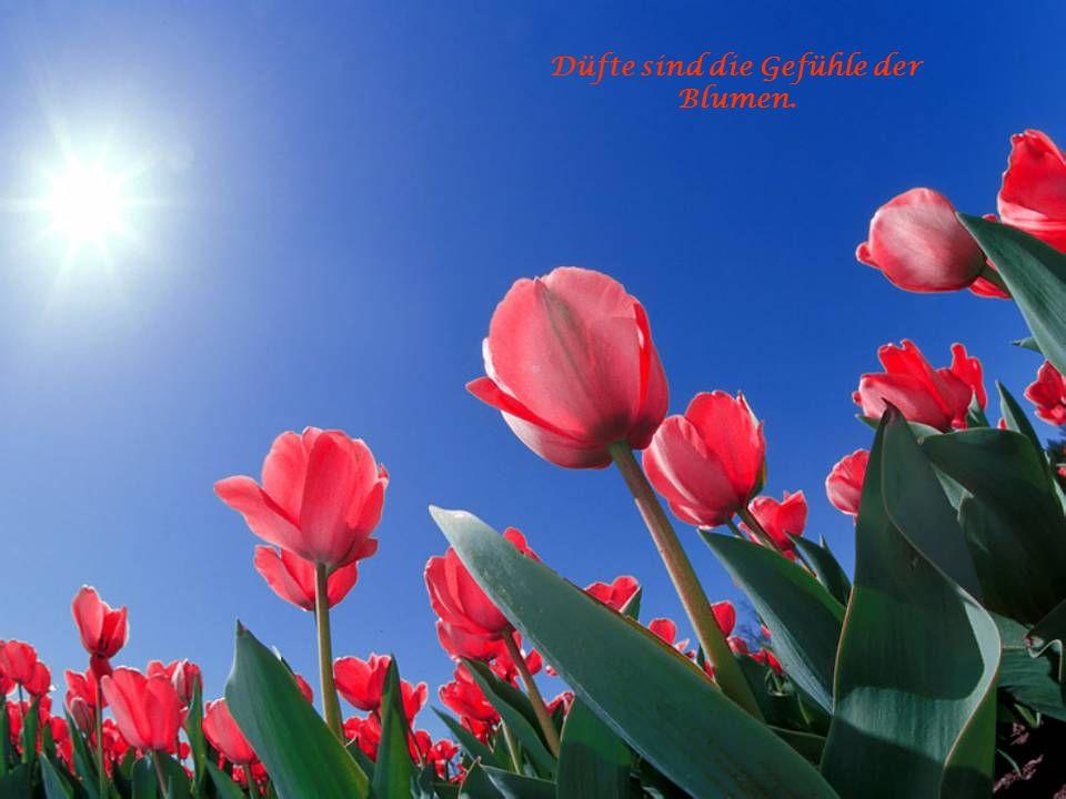 Laß ruhig fließen der Tränen Lauf, Die Blumen sprießen im Regen auf!