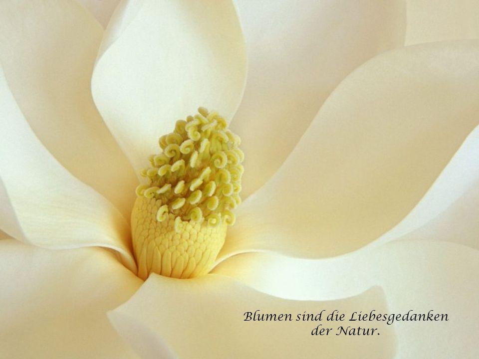 Ein Kopf ohne Gedanken ist wie ein Garten ohne Blumen! - vice versa - Ein Garten ohne Blumen ist wie ein Kopf ohne Gedanken!