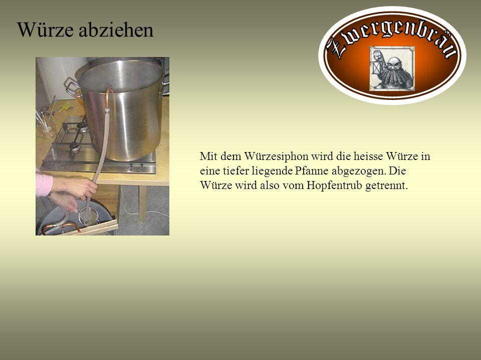 Würze abziehen Mit dem Würzesiphon wird die heisse Würze in eine tiefer liegende Pfanne abgezogen. Die Würze wird also vom Hopfentrub getrennt.