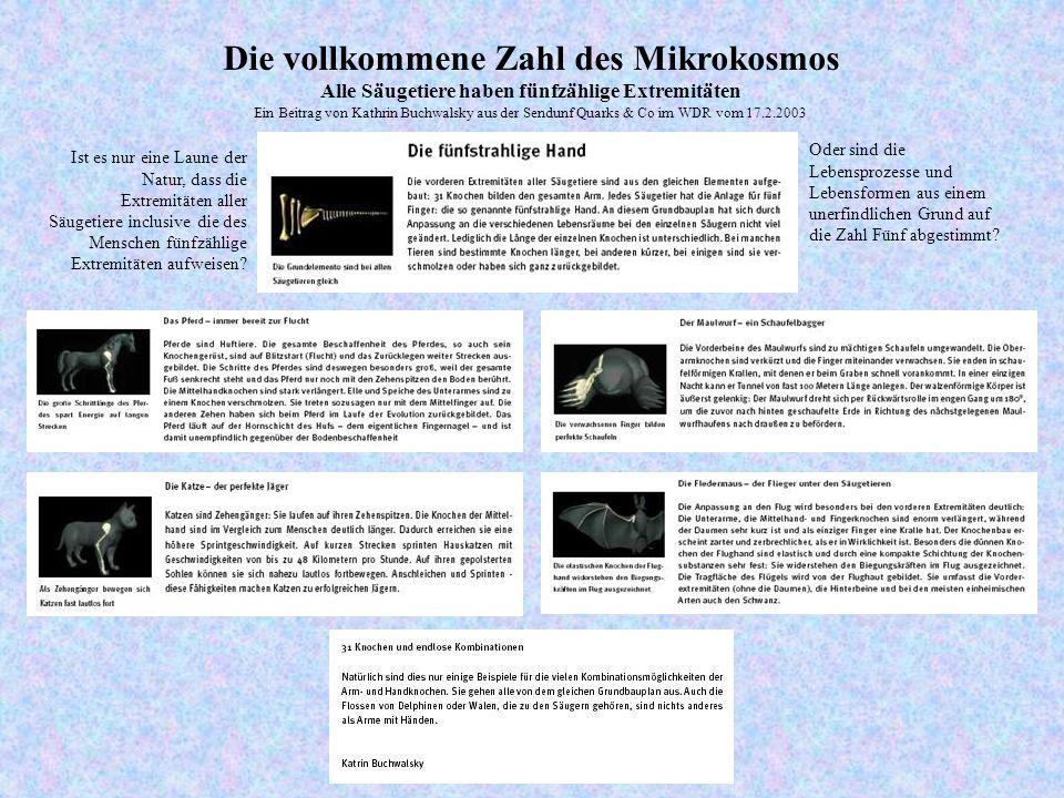 Alle Säugetiere haben fünfzählige Extremitäten Ein Beitrag von Kathrin Buchwalsky aus der Sendunf Quarks & Co im WDR vom 17.2.2003 Ist es nur eine Laune der Natur, dass die Extremitäten aller Säugetiere inclusive die des Menschen fünfzählige Extremitäten aufweisen.