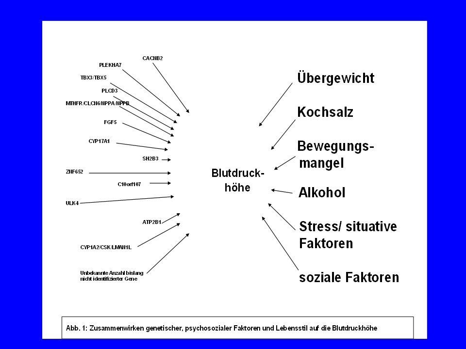 Blutdruck-Regulation nach G. Mulder, 1980