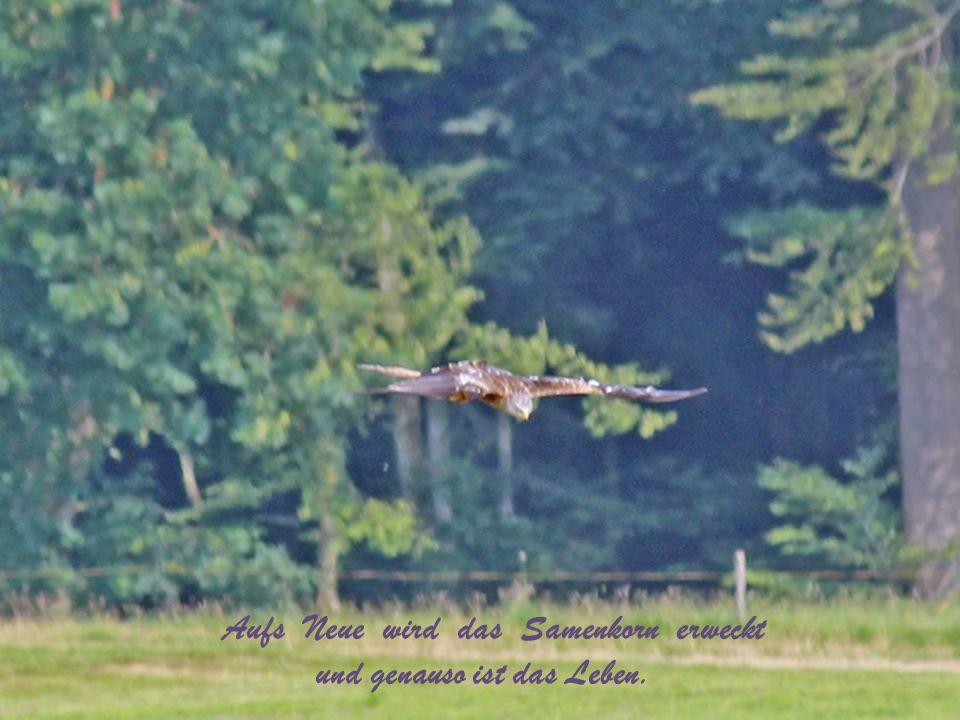 ...die Tage vergehen wie das im Wind fliegende Herbstlaub, und die Tage kehren wieder mit dem reinen Himmel und der Pracht der Wälder, …