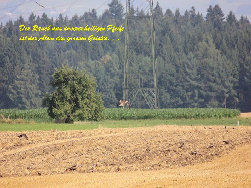 Aufs Neue wird das Samenkorn erweckt und genauso ist das Leben.