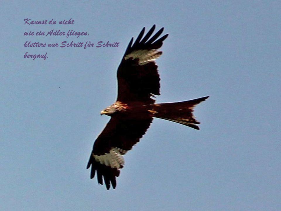 Solange der Adler jagt und fliegt, lebt die Welt, …