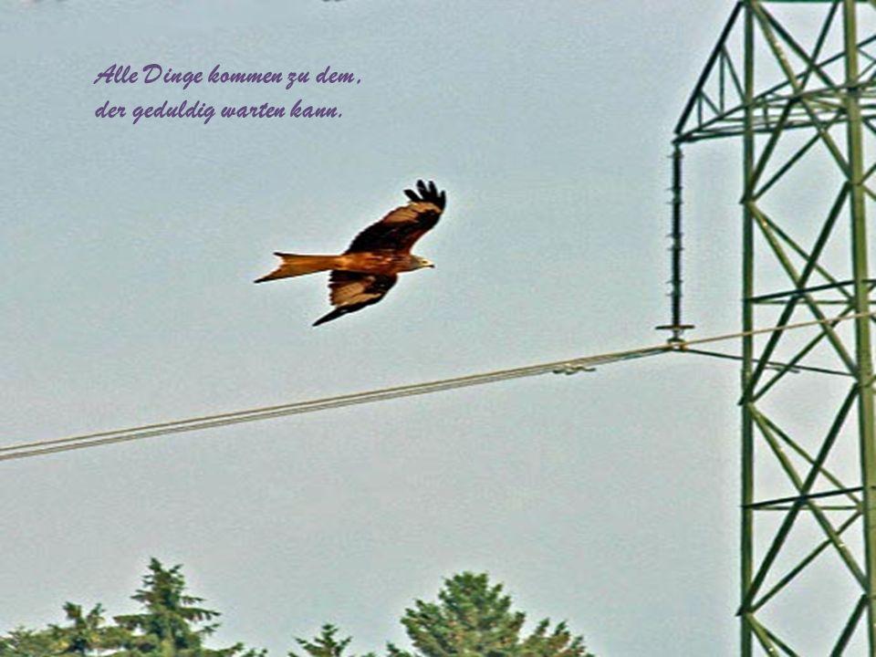 …doch fliegt und jagt der Adler nicht mehr, stirbt die Welt.