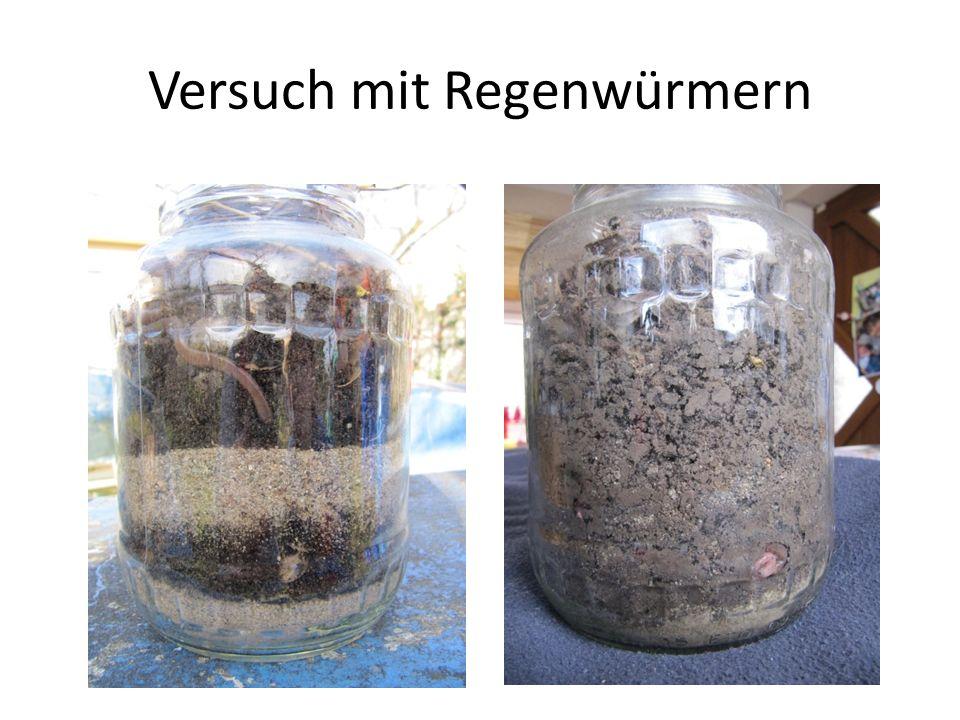 Bodenarten Erdboden besteht aus vielen Stoffen.