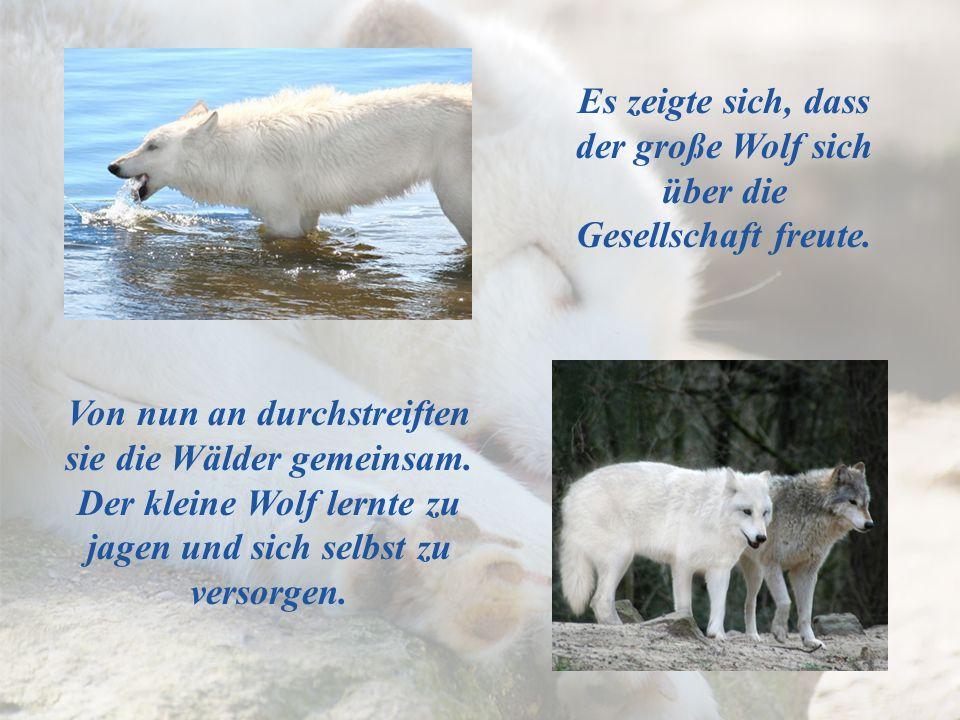 Von nun an durchstreiften sie die Wälder gemeinsam. Der kleine Wolf lernte zu jagen und sich selbst zu versorgen. Es zeigte sich, dass der große Wolf