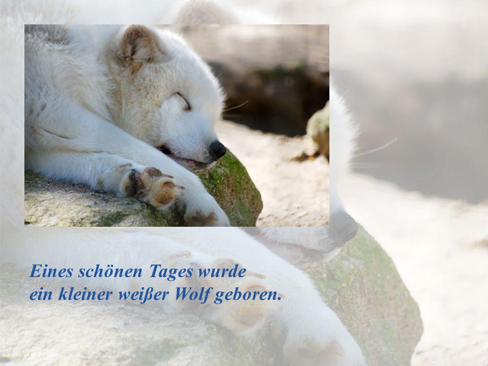 Der kleine Wolf wuchs heran und begann seine Umgebung zu erkunden: Die Hütte, den Hügel und das kleine Wasserloch.