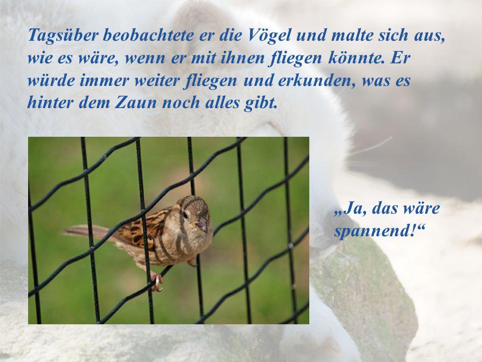 Tagsüber beobachtete er die Vögel und malte sich aus, wie es wäre, wenn er mit ihnen fliegen könnte. Er würde immer weiter fliegen und erkunden, was e