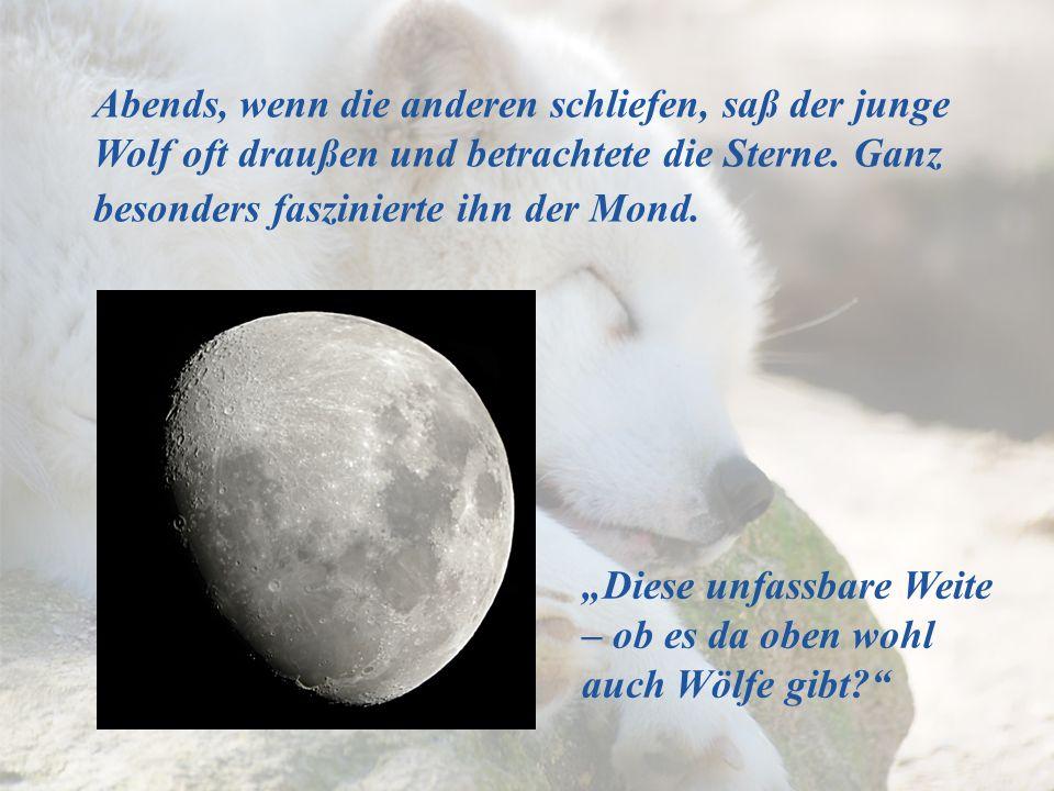 Diese unfassbare Weite – ob es da oben wohl auch Wölfe gibt? Abends, wenn die anderen schliefen, saß der junge Wolf oft draußen und betrachtete die St