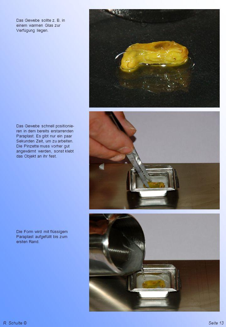 R.Schulte ©Seite 13 Das Gewebe sollte z. B. in einem warmen Glas zur Verfügung liegen.