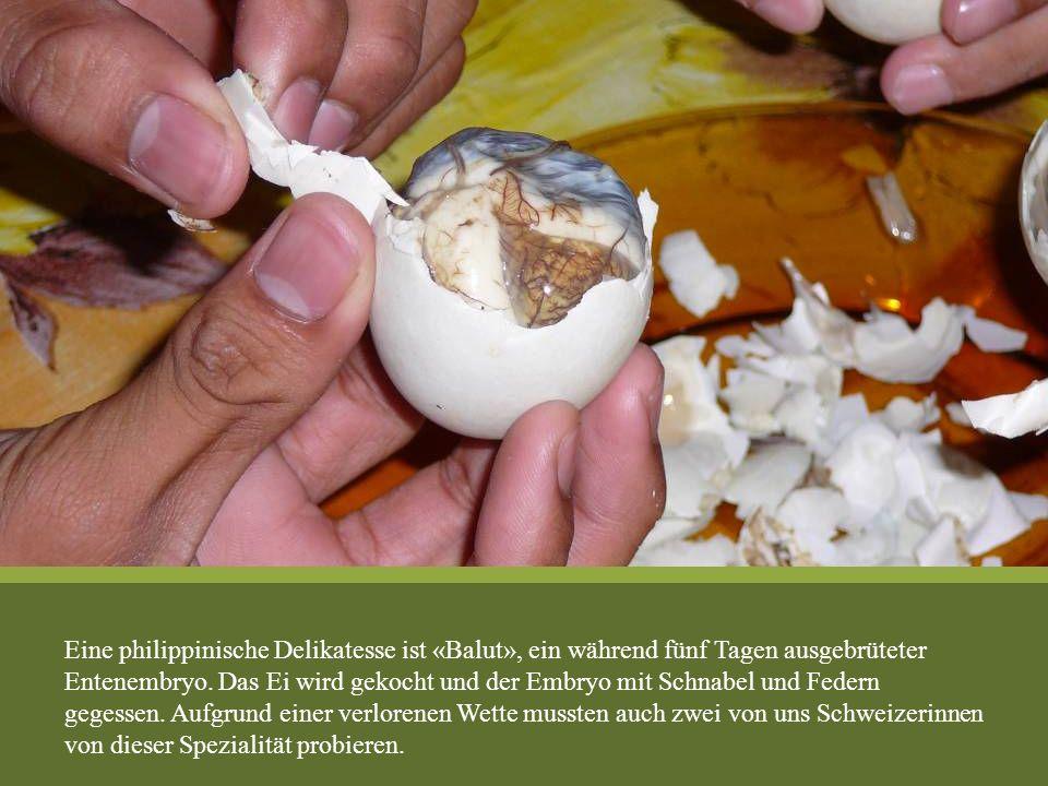 Eine philippinische Delikatesse ist «Balut», ein während fünf Tagen ausgebrüteter Entenembryo. Das Ei wird gekocht und der Embryo mit Schnabel und Fed