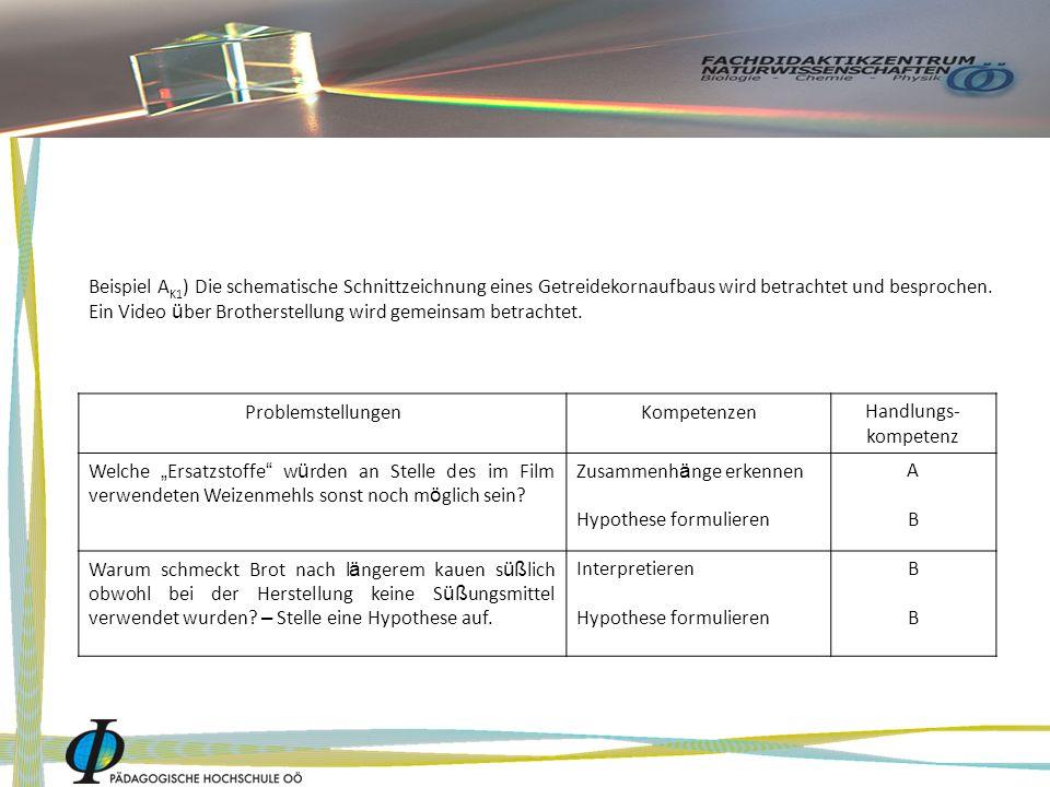 Beispiel A K1 ) Die schematische Schnittzeichnung eines Getreidekornaufbaus wird betrachtet und besprochen.