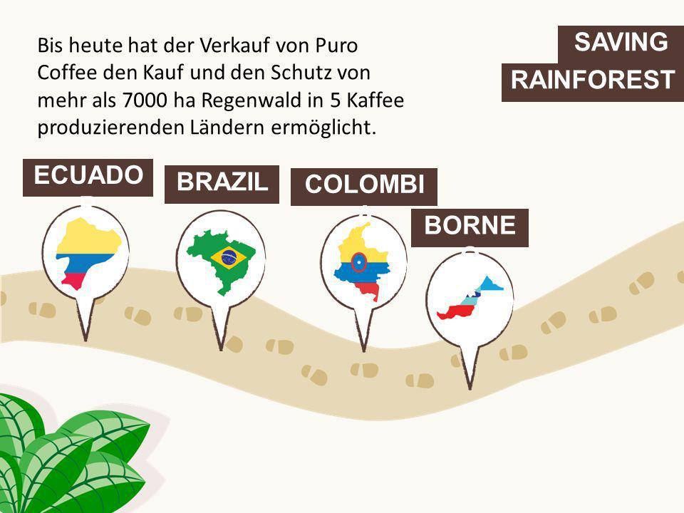 SAVING RAINFOREST ECUADO R BRAZIL COLOMBI A BORNE O Bis heute hat der Verkauf von Puro Coffee den Kauf und den Schutz von mehr als 7000 ha Regenwald i