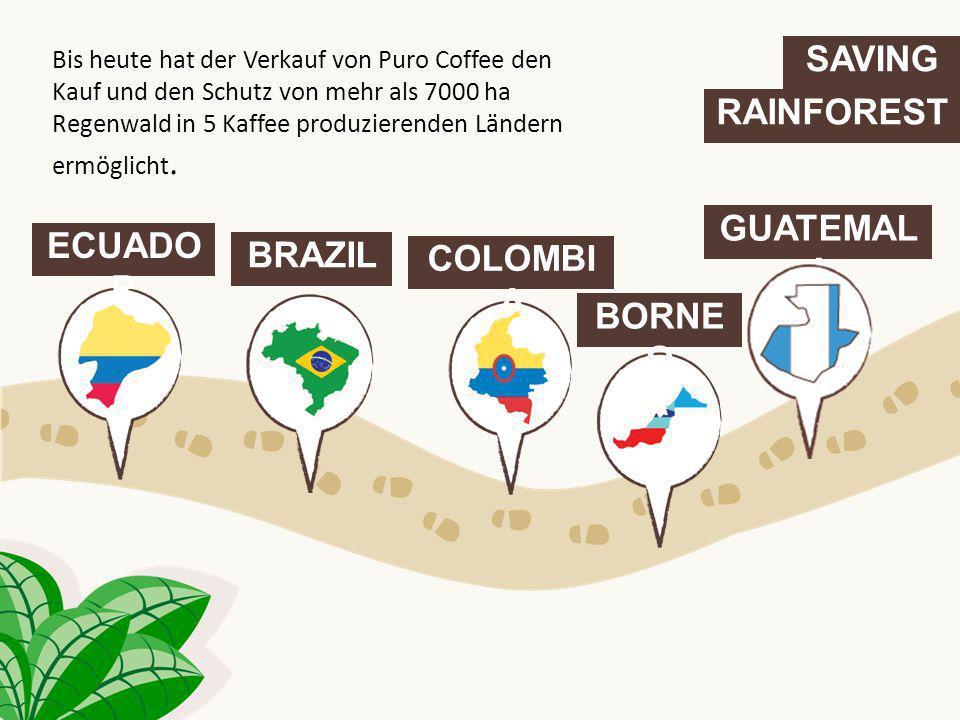 SAVING RAINFOREST ECUADO R BRAZIL COLOMBI A GUATEMAL A BORNE O Bis heute hat der Verkauf von Puro Coffee den Kauf und den Schutz von mehr als 7000 ha