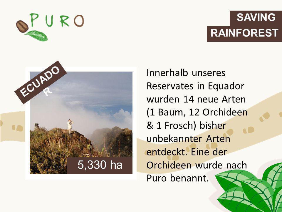 ECUADO R 5,330 ha SAVING RAINFOREST Innerhalb unseres Reservates in Equador wurden 14 neue Arten (1 Baum, 12 Orchideen & 1 Frosch) bisher unbekannter