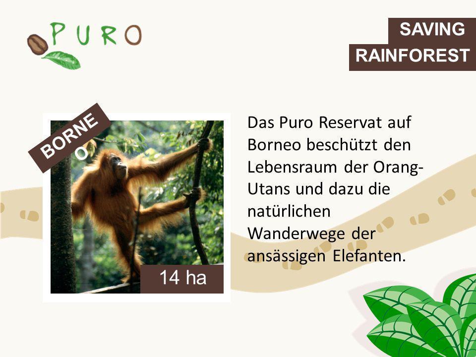 Das Puro Reservat auf Borneo beschützt den Lebensraum der Orang- Utans und dazu die natürlichen Wanderwege der ansässigen Elefanten. BORNE O 14 ha SAV