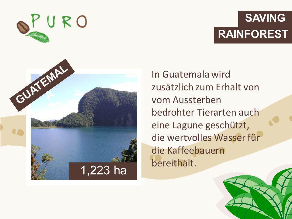 In Guatemala wird zusätzlich zum Erhalt von vom Aussterben bedrohter Tierarten auch eine Lagune geschützt, die wertvolles Wasser für die Kaffeebauern