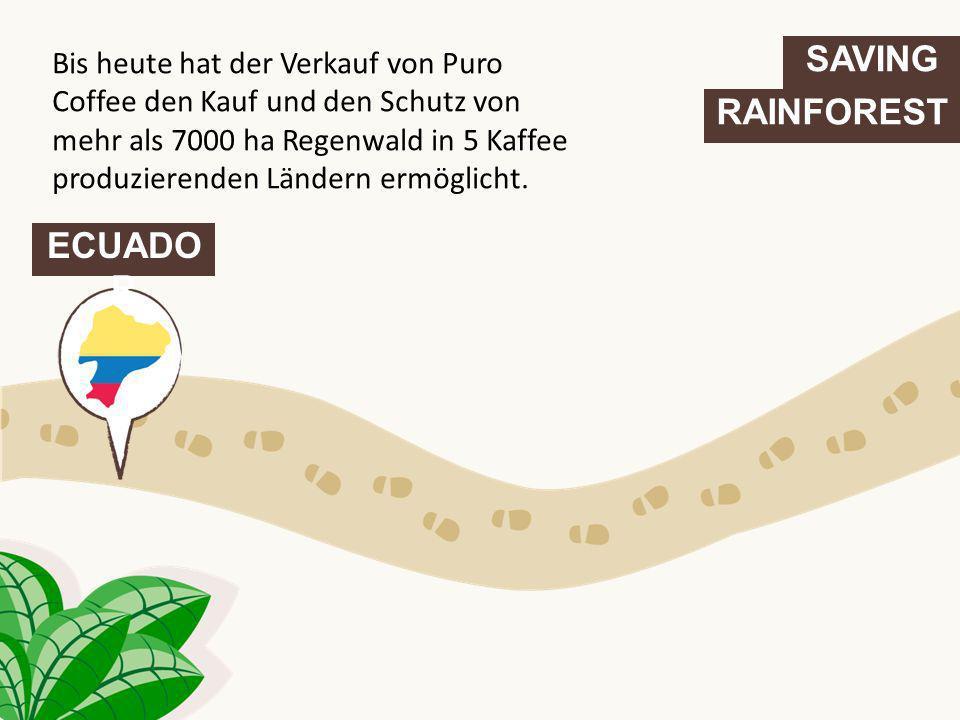 SAVING RAINFOREST ECUADO R Bis heute hat der Verkauf von Puro Coffee den Kauf und den Schutz von mehr als 7000 ha Regenwald in 5 Kaffee produzierenden