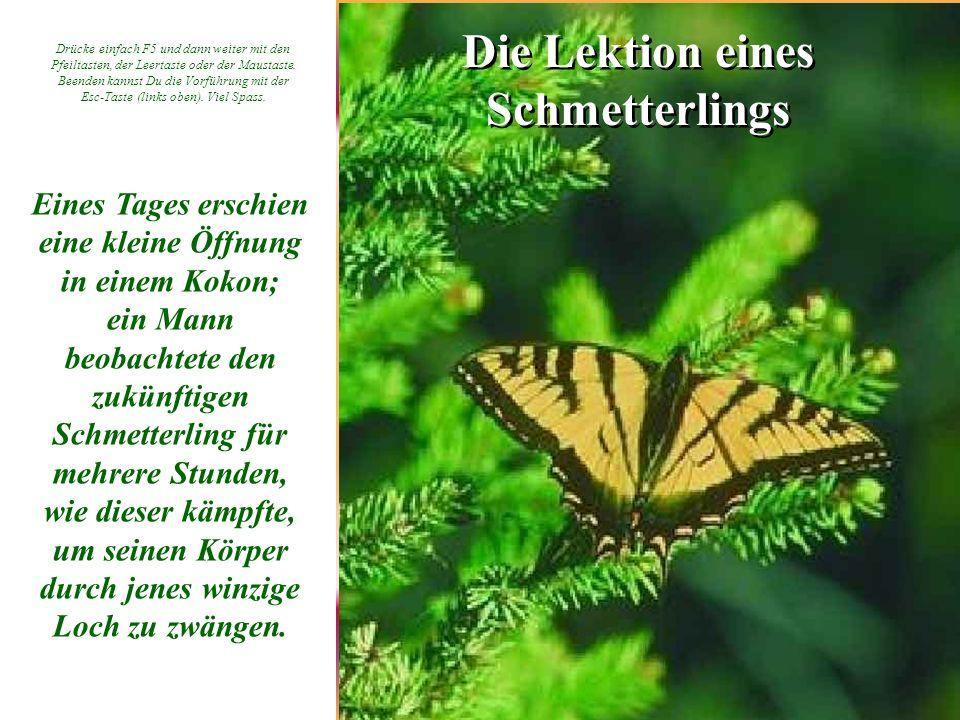 Die Lektion eines Schmetterlings Eines Tages erschien eine kleine Öffnung in einem Kokon; ein Mann beobachtete den zukünftigen Schmetterling für mehre