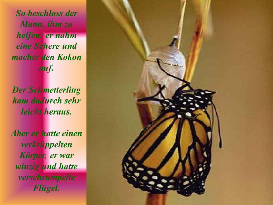 Der Mann beobachtete das Geschehen weiter, weil er erwartete, daß die Flügel sich jeden Moment öffnen, sich vergrößern und sich ausdehnen würden, um den Körper des Schmetterlings zu stützen und ihm Spannkraft zu verleihen.