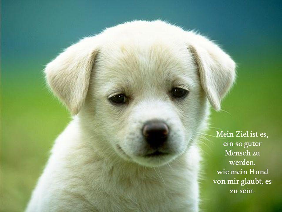 Mein Ziel ist es, ein so guter Mensch zu werden, wie mein Hund von mir glaubt, es zu sein.