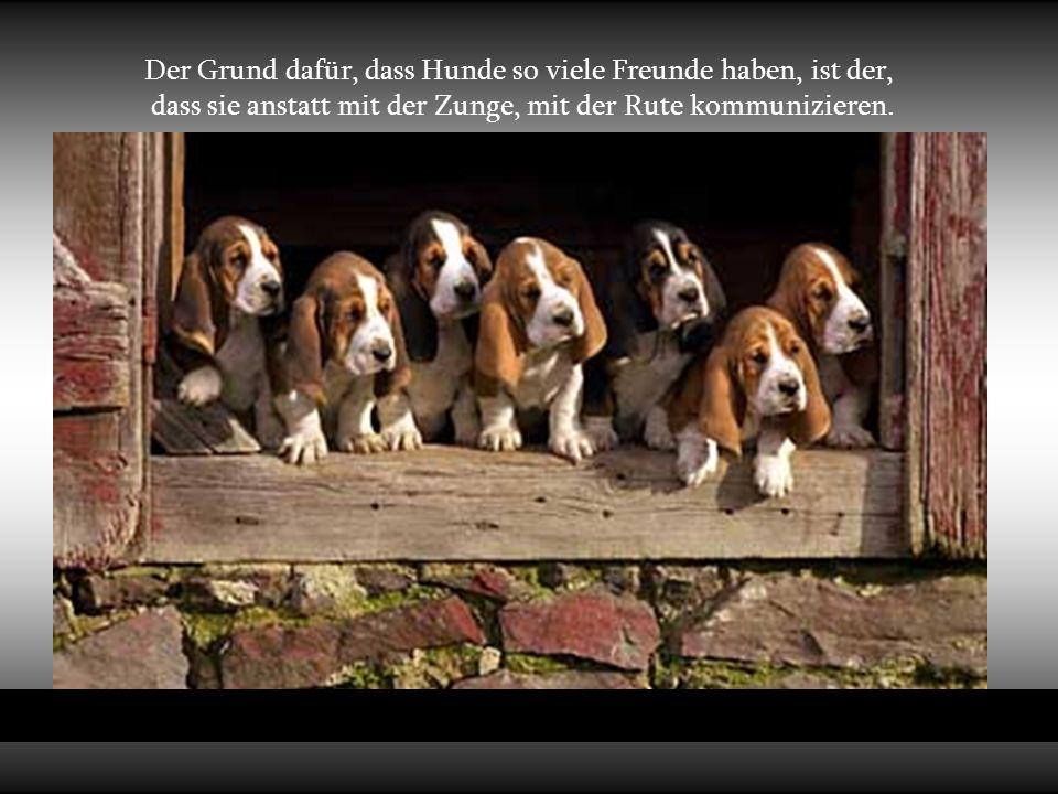 Der Grund dafür, dass Hunde so viele Freunde haben, ist der, dass sie anstatt mit der Zunge, mit der Rute kommunizieren.