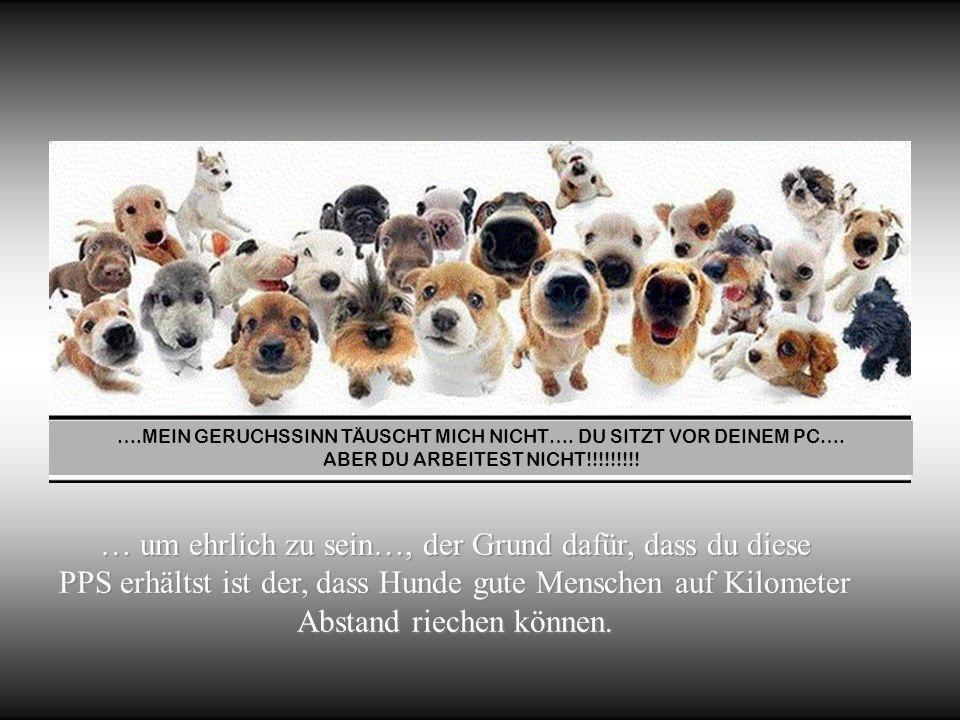 … um ehrlich zu sein…, der Grund dafür, dass du diese PPS erhältst ist der, dass Hunde gute Menschen auf Kilometer Abstand riechen können.